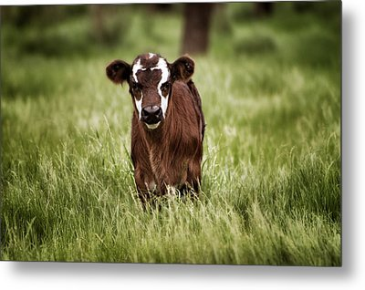 Baby Metal Print by Kimberly Danner