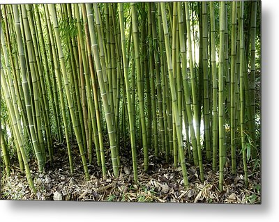 Bamboo Metal Print by Les Cunliffe