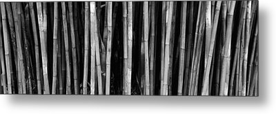 Bamboo Trees In A Botanical Garden Metal Print by Panoramic Images