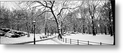Bare Trees During Winter In A Park Metal Print by Panoramic Images