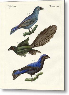 Beautiful Foreign Birds Metal Print