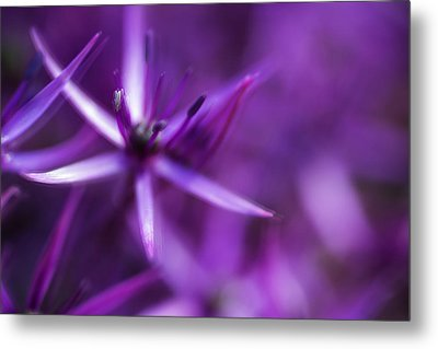 Beautiful Purple Floral Abstract Metal Print by Matthew Gibson