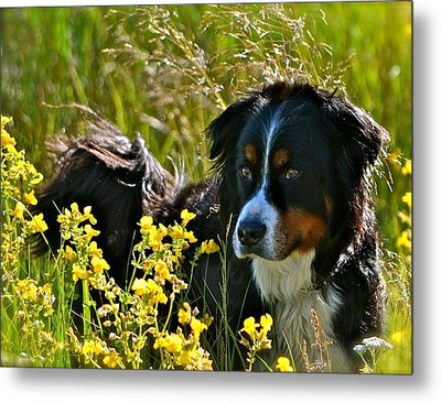 Beauty Boy Metal Print by Barbara Dudley