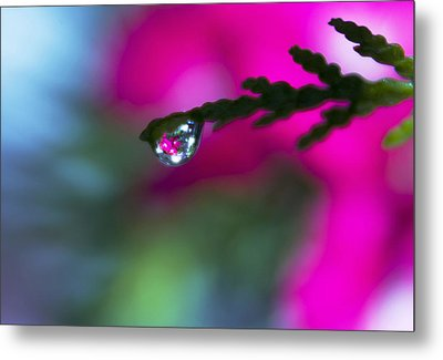 Beauty Within Metal Print by Dana Moyer