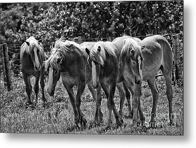 Metal Print featuring the photograph Belgian Draft Horses by Wilma  Birdwell