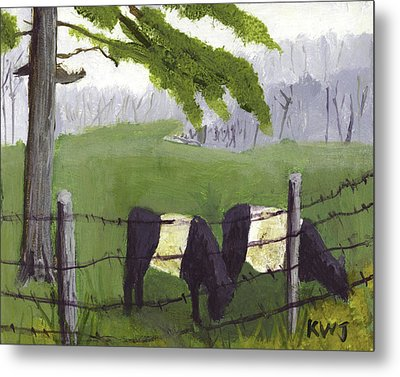 Belted Galloway Cows In Rockport Maine Metal Print