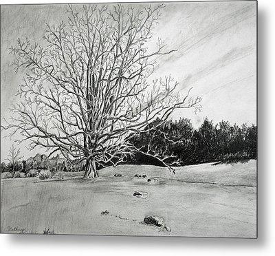 Big Tree Metal Print by Christine Lathrop