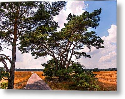 Bike Track In Hoge Veluwe National Park. Netherlands Metal Print by Jenny Rainbow