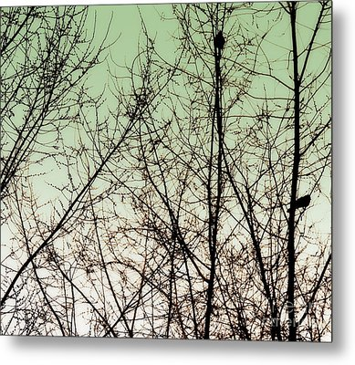 Birds Metal Print by A K Dayton