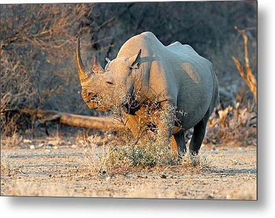 Black Rhinoceros Metal Print