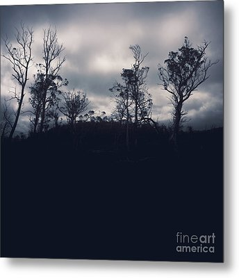 Black Silhouette Trees In Spooky Tasmanian Forest Metal Print by Jorgo Photography - Wall Art Gallery