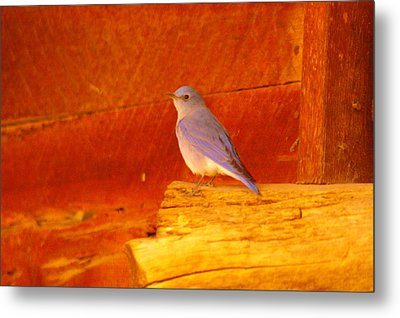 Blue Bird Metal Print by Jeff Swan