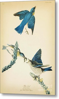 Blue Bird Metal Print by Celestial Images