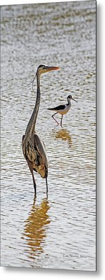 Blue Heron And Stilt Metal Print