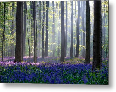 Bluebells Metal Print by Adrian Popan