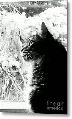 Metal Print featuring the photograph Bo by Jacqueline McReynolds