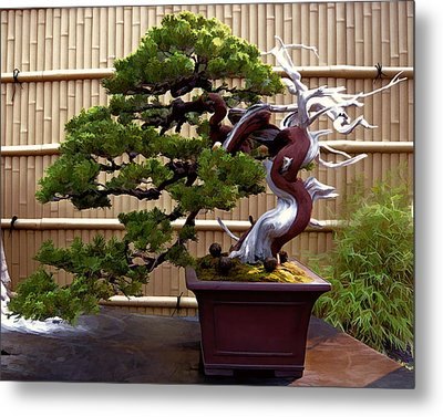 Bonsai Tree And Bamboo Fence Metal Print by Elaine Plesser