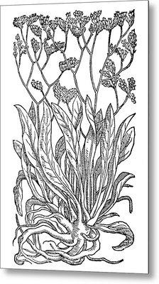 Botany Sea Lavender Metal Print