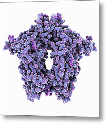 Bovine Coronavirus Enzyme Metal Print by Laguna Design