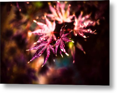Bright Leaves Metal Print by J Riley Johnson
