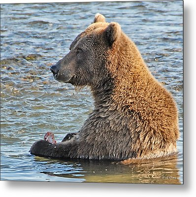 Salmon For Dinner Metal Print by Dyle   Warren