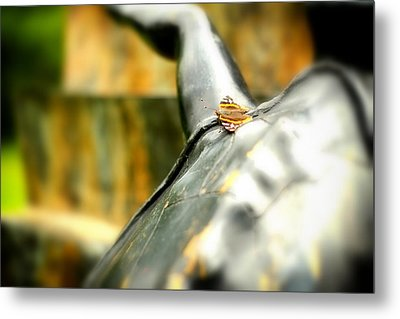 Metal Print featuring the photograph Butterfly by Boris Mordukhayev