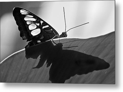 Butterfly II Metal Print by Ron White