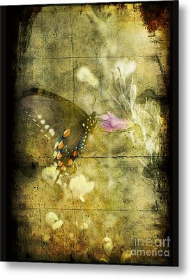 Butterfly Metal Print by Jim Wright
