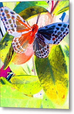 Butterfly  Metal Print by Nico Bielow