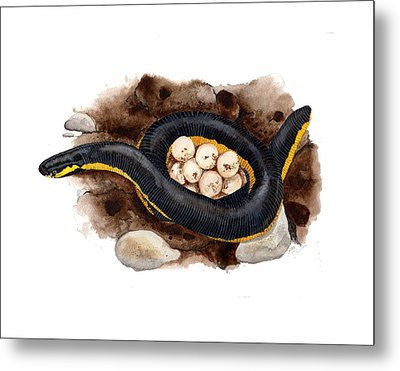 Caecilian Metal Print by Cindy Hitchcock