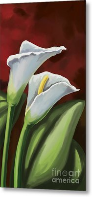 Calla Lilies  Metal Print by Tim Gilliland