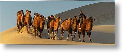 Camel Caravan In A Desert, Gobi Desert Metal Print