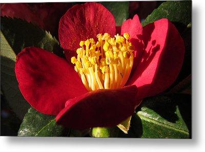 Camellia Flower Metal Print by Joyce Woodhouse