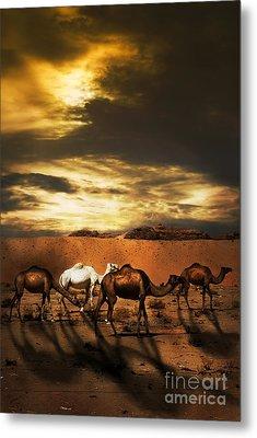 Camels Metal Print by Jelena Jovanovic