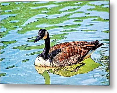 Metal Print featuring the photograph Canada Goose by Ludwig Keck