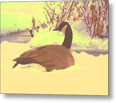 Canadian Goose Metal Print by Larry Campbell