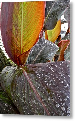 Canna Lily I  Metal Print by Kirsten Giving