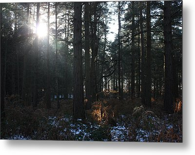 Metal Print featuring the photograph Cannock Chase by Jean Walker