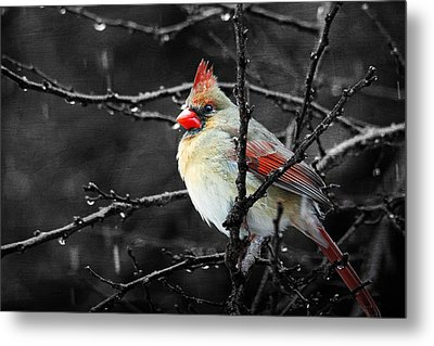 Metal Print featuring the photograph Cardinal On A Rainy Day by Trina  Ansel