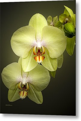 Cascade Of Yellow Orchids Metal Print