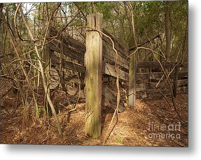 Catchpen Metal Print by Russell Christie