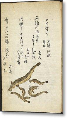 Catfish Metal Print by British Library