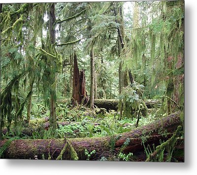 Metal Print featuring the photograph Cathedral Grove by Marilyn Wilson