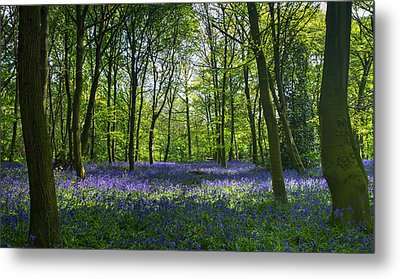 Chalet Wood Wanstead Park Bluebells Metal Print
