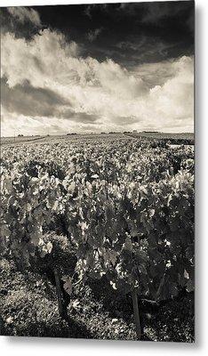 Chateau Lafite Rothschild Vineyards Metal Print