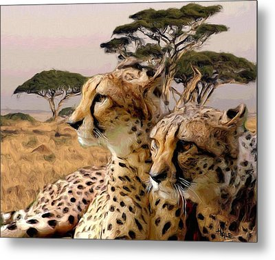 Cheetah Brothers Metal Print by Roger D Hale