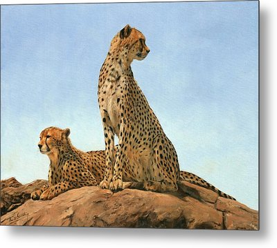 Cheetahs Metal Print by David Stribbling
