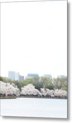 Cherry Blossoms - Washington Dc - 011316 Metal Print by DC Photographer