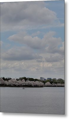 Cherry Blossoms - Washington Dc - 011324 Metal Print by DC Photographer