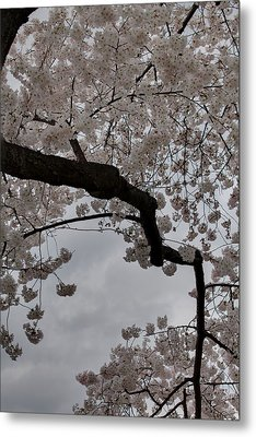 Cherry Blossoms - Washington Dc - 011341 Metal Print by DC Photographer